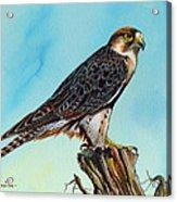 Falcon On Stump Acrylic Print