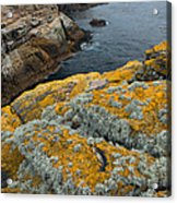 Falkland Islands Acrylic Print