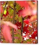 Fall 08-007 Acrylic Print
