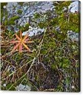 Fall And Moss Acrylic Print