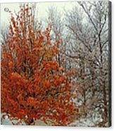 Fall And Winter 2 Acrylic Print