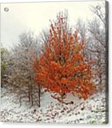 Fall And Winter Acrylic Print