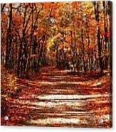 Fall At Cheesequake Acrylic Print