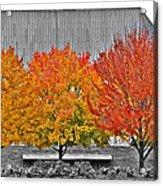 Fall At The Mann Acrylic Print