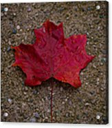 Fall Acrylic Print by BandC  Photography