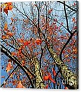 Fall Beauty Acrylic Print