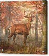 Fall Buck Acrylic Print