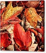 Fall Carpet Acrylic Print