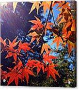 Fall Color 1 Acrylic Print