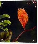 Fall Color 2 Acrylic Print