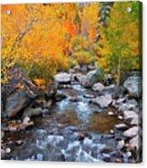 Fall Color Along Bishop Creek, Inyo Acrylic Print
