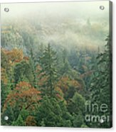 Fall Color And Fog Near Garberville California Acrylic Print