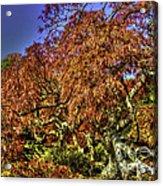Fall Color At Biltmore Acrylic Print