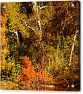 Fall Color Creekside Acrylic Print