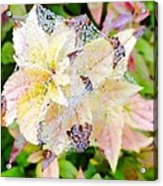 Fall Color On A Foggy Day 4 Acrylic Print