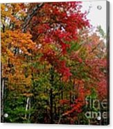 Fall Color Palette Acrylic Print