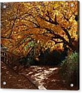 Fall Color Path Acrylic Print