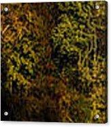 Fall Color Trees V7 Pano Acrylic Print