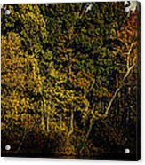 Fall Color Trees V8 Pano Acrylic Print