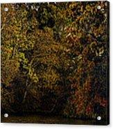 Fall Color Trees V9 Pano Acrylic Print
