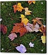 Fall Colored Leaves Acrylic Print