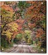 Fall Colors - 2 Acrylic Print
