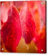 Fall Colors 0666 Acrylic Print