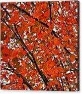 Fall Colors 2014-10 Acrylic Print