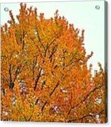Fall Colors 2014-11 Acrylic Print