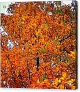 Fall Colors 2014 - 14 Acrylic Print