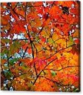 Fall Colors 2014-4 Acrylic Print