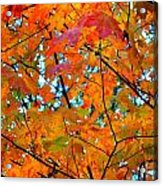 Fall Colors 2014-5 Acrylic Print