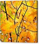 Fall Colors 2014-7 Acrylic Print