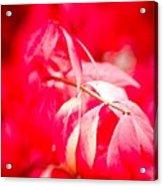 Fall Colors 6669 Acrylic Print