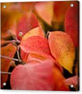Fall Colors 6675 Acrylic Print
