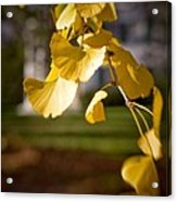 Fall Colors 6737 Acrylic Print