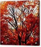 Fall Colors Cape May Nj Acrylic Print