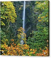 Fall Colors Frame Multnomah Falls Columbia River Gorge Oregon Acrylic Print
