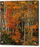 Fall Colors Greeting Card Acrylic Print
