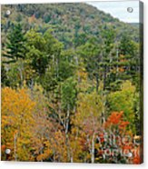 Fall Colors II Acrylic Print
