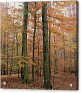 Fall Colors In Catoctin Mt. Park Acrylic Print