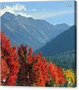 Fall Colors In Joseph Or Acrylic Print