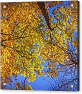 Fall Colors In The Sky  Acrylic Print