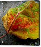 Fall Colors On A Downed Aspen Leaf Acrylic Print