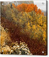 Fall Colors On June Lake Loop Acrylic Print