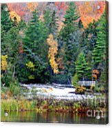 Fall Colors On The  Tahquamenon River   Acrylic Print