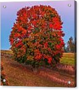 Fall Colors Over A Big Tree In Warmia In Poland During Twilight Hour Acrylic Print