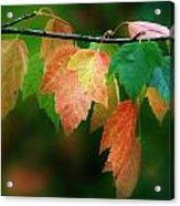 Fall Comes Acrylic Print
