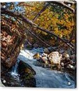 Fall Cottonwood I Acrylic Print