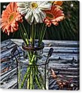 Fall Daisy Cheer Acrylic Print